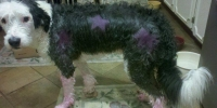 dyed dog 2