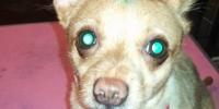 dyed dog 4